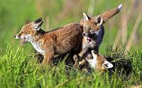 Fotos des Wildtierfotografen Erich Marek in Feldberg
