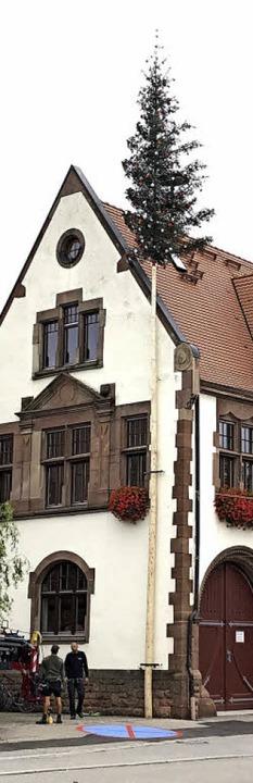 <BZ-Rubrik>Eine Bürgermeistertanne</BZ...r dem Rathaus in Kürzell aufgepflanzt.  | Foto: privat