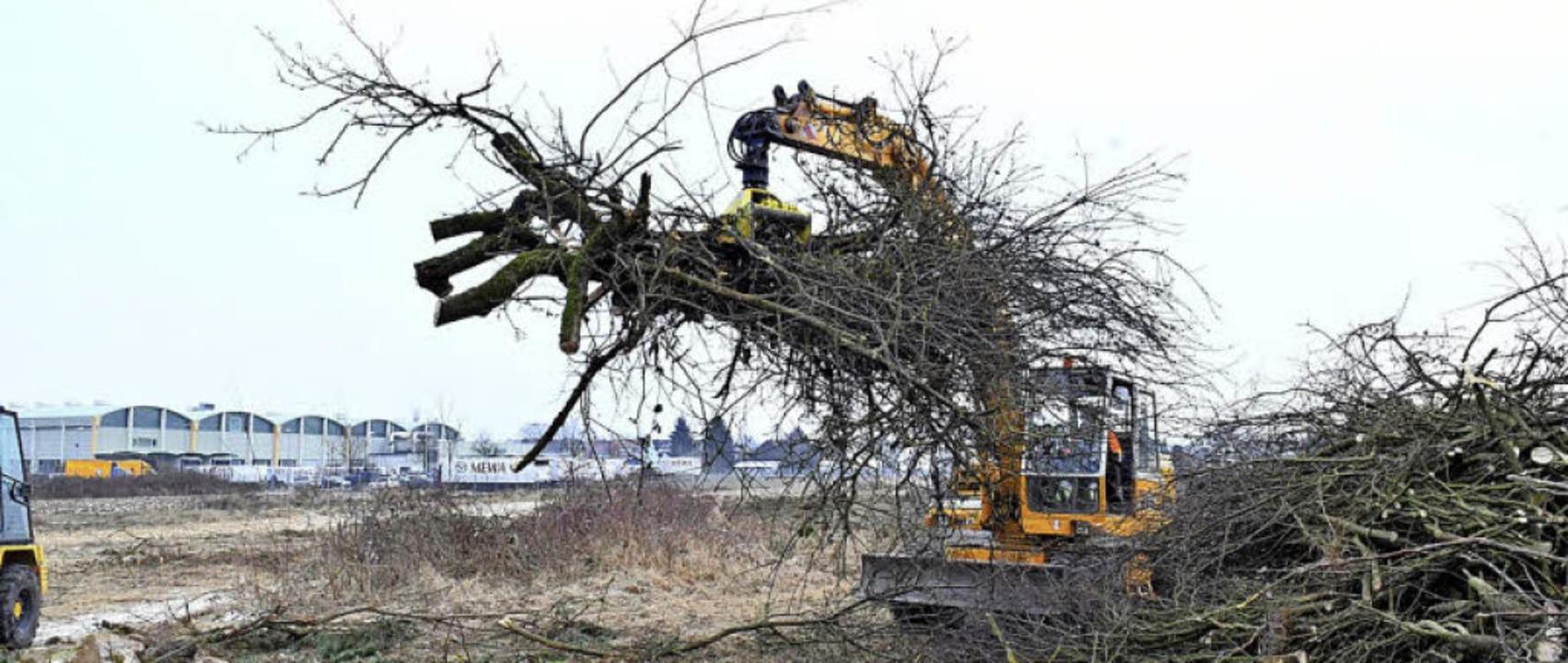 <BZ-Rubrik>Der Spatenstich</BZ-Rubrik>...inter rund 100 Streuobstbäume gefällt.  | Foto: Wolfgang Künstle