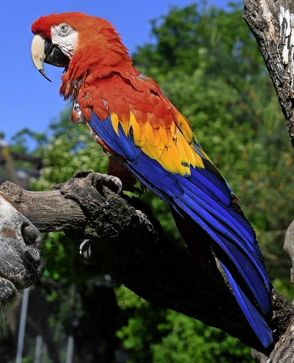 Papagei Douglas hat 2017 seinen 50. Geburtstag gefeiert.    Foto: dpa