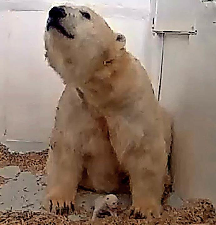Die Eisbärin Tonja mit ihrem  Eisbär-Baby  im Tierpark Berlin  | Foto: Tierpark Berlin/dpa