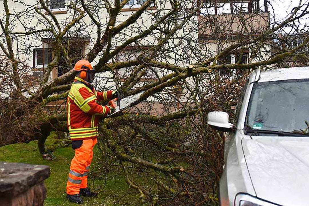 In Kirchzarten hielt dieser Baum Burglind nicht Stand.  | Foto: dpa