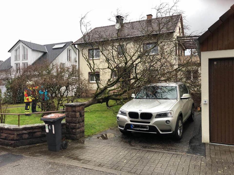 Umgestürzter Baum in Kirchzarten  | Foto: Feuerwehr Kirchzarten