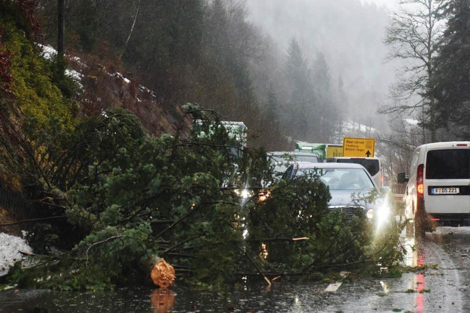 Ein umgestürzter Baum hindert Autos daran  auf der B317 am Feldberg ungebremst zu fahren. (Foto: dpa)