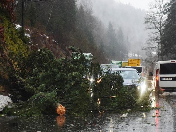 Ein umgestürzter Baum hindert Autos daran  auf der B317 am Feldberg ungebremst zu fahren.