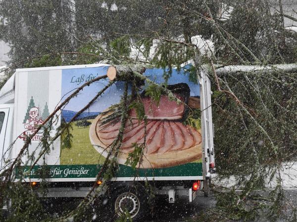 Auf der B500 am Feldberg landete ein Baum auf einem Metzgerei-Lkw.