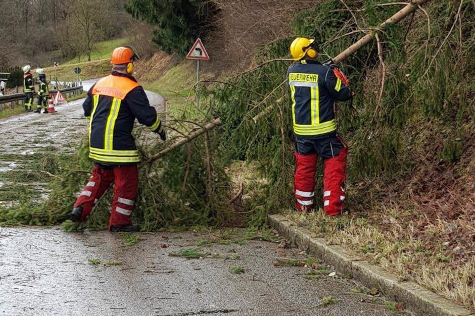 Mehrere Bäume liegen auf der Verbindungsstraße zwischen Wehr und Dossenbach. (Foto: Freiwillige Feuerwehr Wehr)