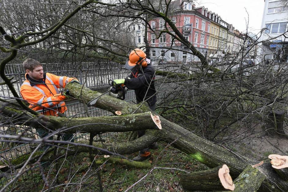 Auf dem Spielplatz auf dem Stühlinger Kirchplatz in Freiburg sind beim Sturmtief Burglind zwei Bäume, vermutlich Blutpflaumen, umgestürzt. (Foto: Thomas Kunz)