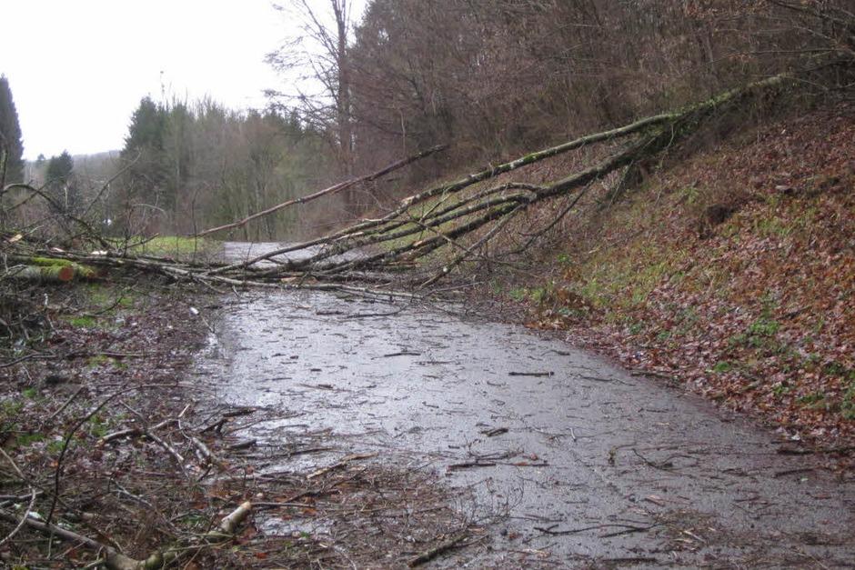Schwörstadt. Straßen Richtung Dossenbach und Schopfheim sind wegen Baumbruch gesperrt. Die  Ortsdurchfahrt B34 ist halbseitig gesperrt wegen heruntergewehten Ziegeln und Dachrinnen. (Foto: Helmut Kohler)
