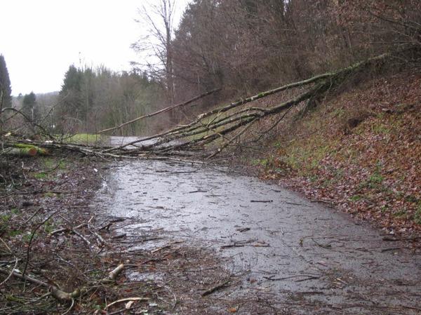 Schwörstadt. Straßen Richtung Dossenbach und Schopfheim sind wegen Baumbruch gesperrt. Die  Ortsdurchfahrt B34 ist halbseitig gesperrt wegen heruntergewehten Ziegeln und Dachrinnen.