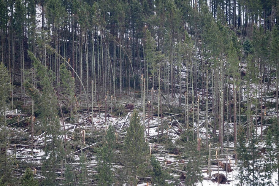 Am Winterberg in Falkau hat Burglind Spuren der Verwüstung hinterlassen, Bäume knickten reihenweise um. (Foto: Susanne Gilg)