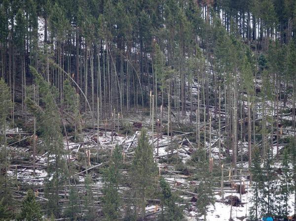 Am Winterberg in Falkau hat Burglind Spuren der Verwüstung hinterlassen, Bäume knickten reihenweise um.