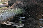 Fotos: Sturm Burglind fällt drei Bäume im Bad Krozinger Kurpark