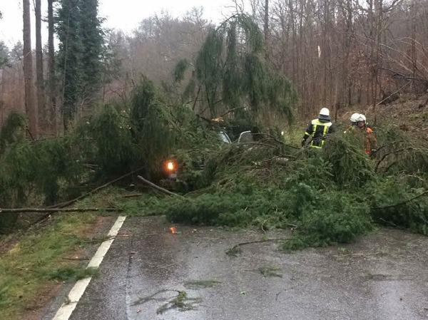 Die Feuerwehr Bad Säckingen war 25 Mal im Einsatz, um Bäume und Äste zu entfernen.