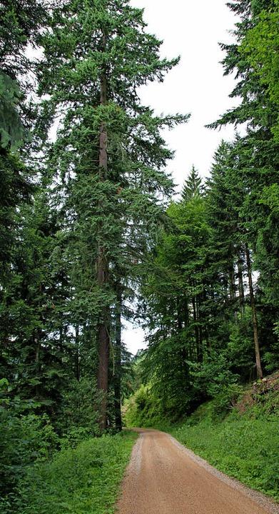Zum Wald gehört auch die Bewirtschaftung.   | Foto: Model