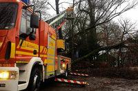 Sturm Burglind stürzt zahlreiche Bäume um