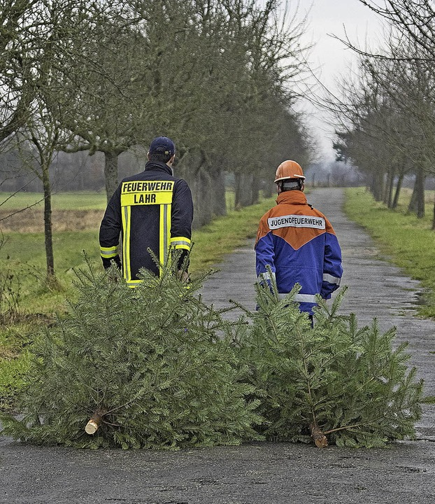 weihnachtsbäume  | Foto: Stadt Lahr