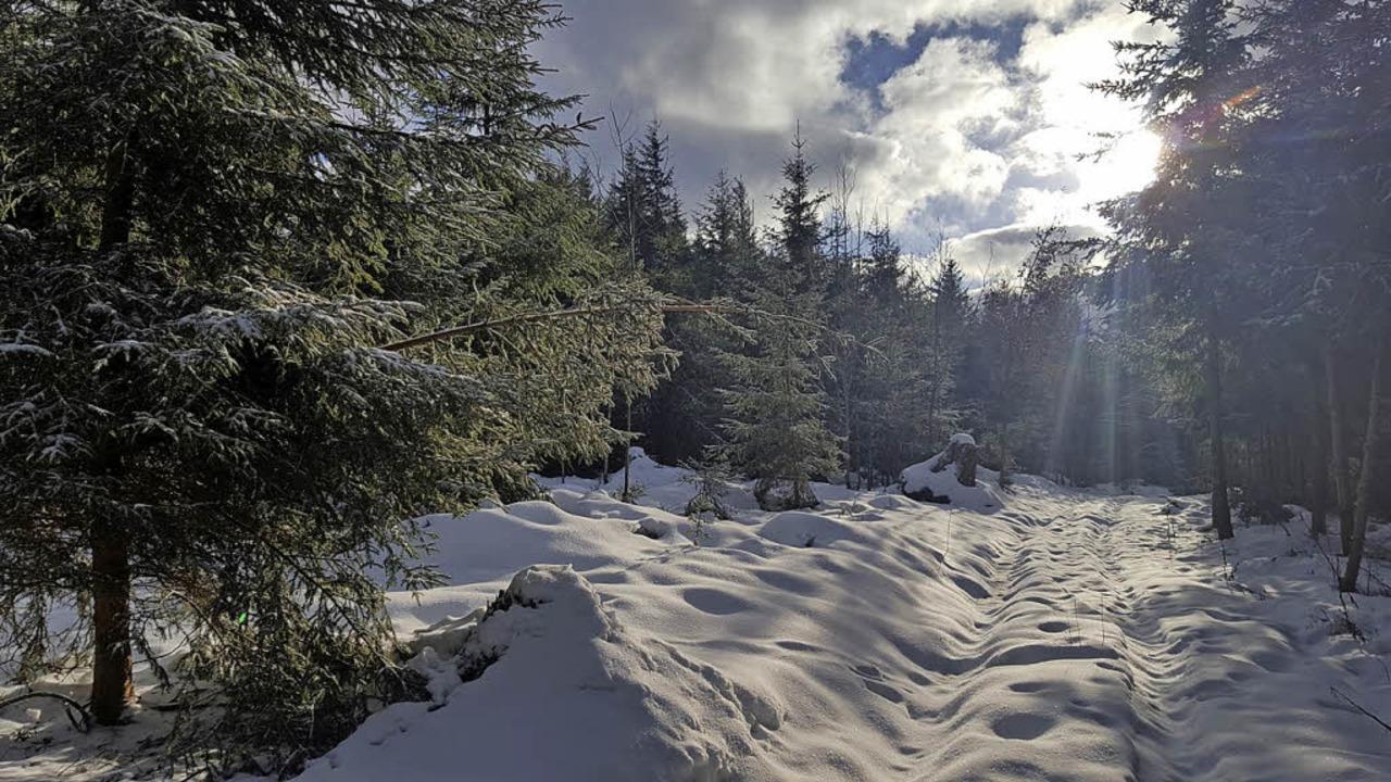 Eine geschlossene Schneedecke am Hünersedel im Dezember 2017    Foto: Patrick Ohnemus