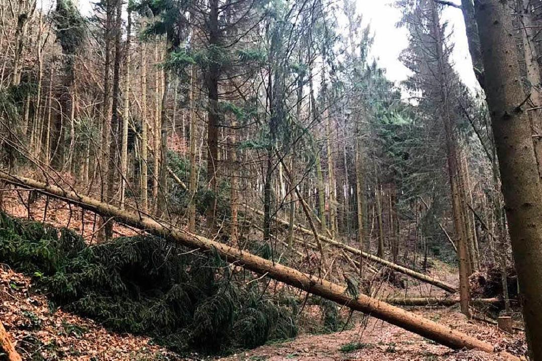 Viele Forstwege sind von umgestürzten Bäumen blockiert.  | Foto: Christian Junele