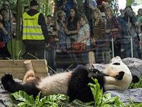 """Zoos sollten weniger Tierarten zeigen"""