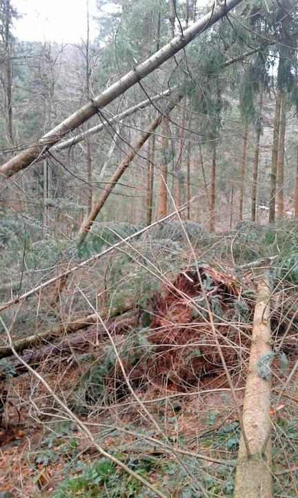 In Heiligenzell im Gewann Schwarzlach  | Foto: Forstamt