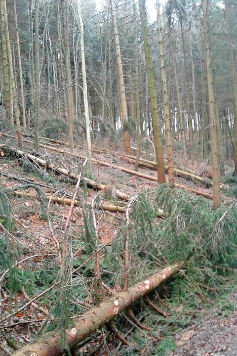 In Schuttern in der Holzgasse  | Foto: Forstamt