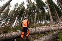 Sturmtief Burglind lässt Forst mit blauem Auge davonkommen