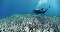 Retter für das Great Barrier Riff gesucht