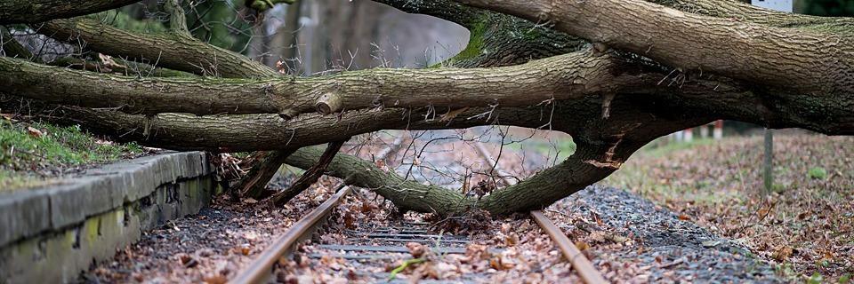 Orkan Friederike: Bahn stellt Fernverkehr ein - Flüge fallen aus - mehrere Tote