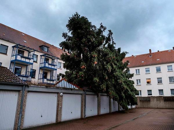 Ein entwurzelter Baum am Stadtrand von Kassel