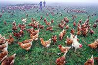 Seebodenhof baut mobilen Hühnerstall für rund 1000 Hühner