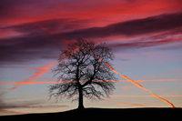 Warum ändern sich Sonnenauf- und -untergangszeiten asymmetrisch?