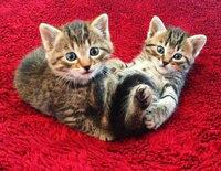 """Zum allerersten Mal Katzenbabys"""""""