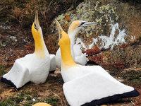 In Neuseeland ist der einsamste Vogel der Welt gestorben