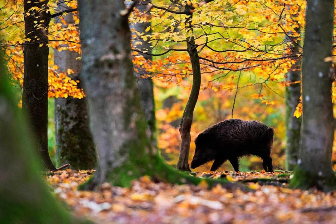 Jäger dürfen nun auch nachtsichtgeräte einsetzten südwest