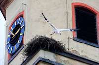 In Freiburg-Tiengen wird ein Storchennest zum Politikum