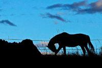 Gnadenhof rettet ausgemusterte Tiere vor dem schlimmen Ende