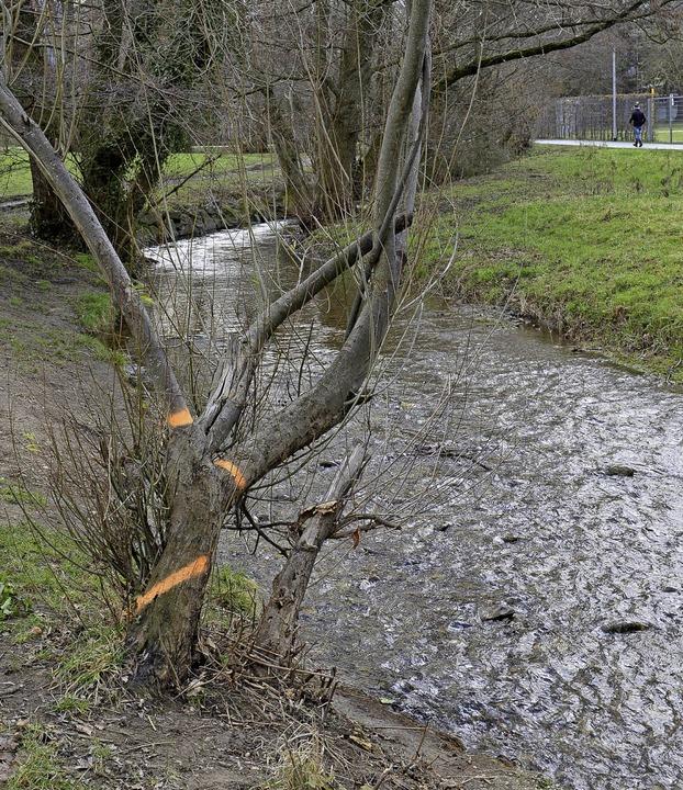 Die Weide am Haslacher Dorfbach muss weichen.   | Foto: Ingo Schneider