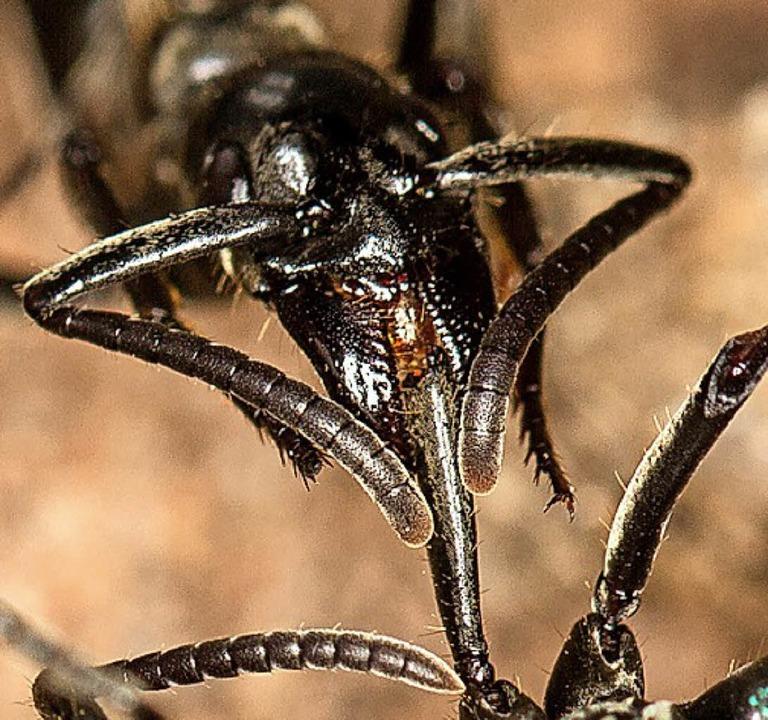Die Ameise im Einsatz   | Foto: dpa