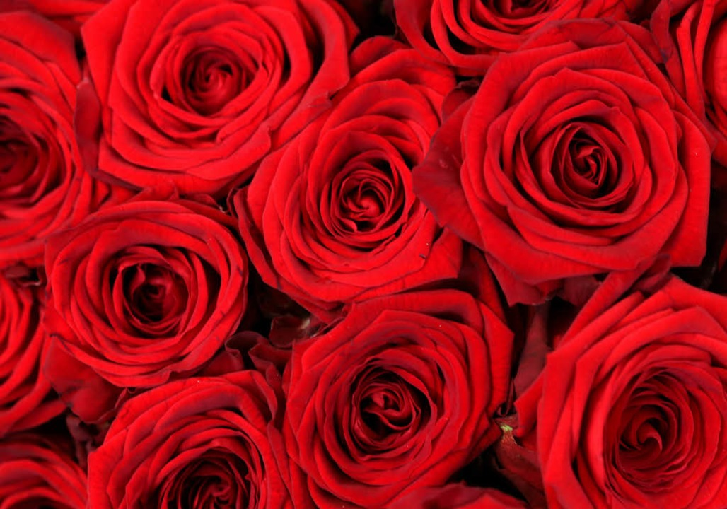 Klassiker zum Valentinstag: rote Rosen  | Foto: dpa