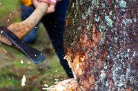 Bäumen in Denzlingen droht die Axt