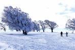 Fotos: Wintermärchen rund um den Schauinsland
