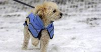 Katzen und Hunde brauchen bei Kälte besondere Pflege