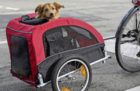 Hundehütte auf Rädern