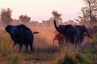 Die Elefanten in Südafrikas Reservaten vermehren sich so gut, dass ihre Zahl zum Problem wird