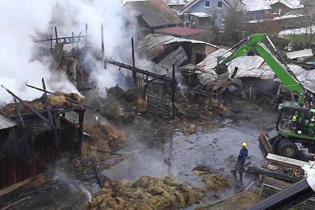 27 Rinder sterben bei Stallbrand - Verdächtiger festgenommen