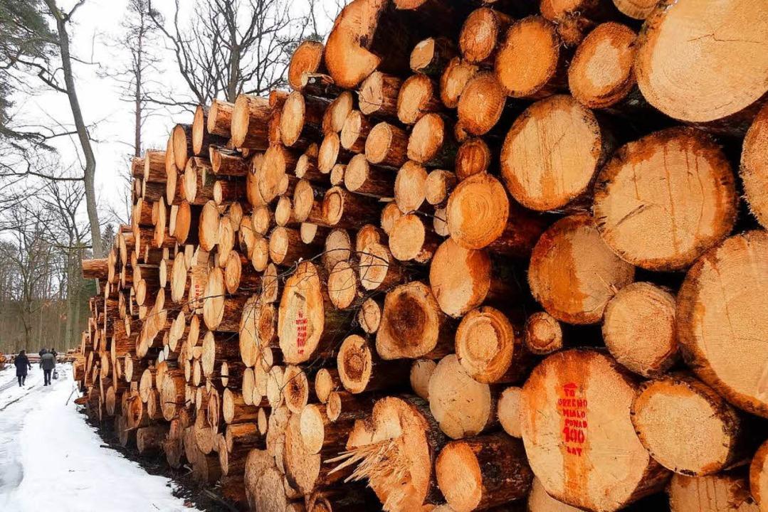 Polens Urwald weiter in Gefahr