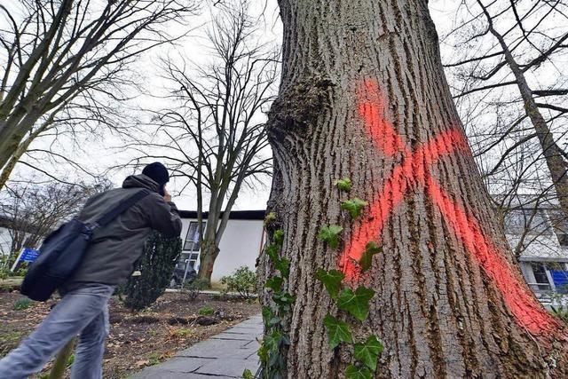 Reaktionen auf Fällarbeiten: Geht es wirklich um die Bäume?