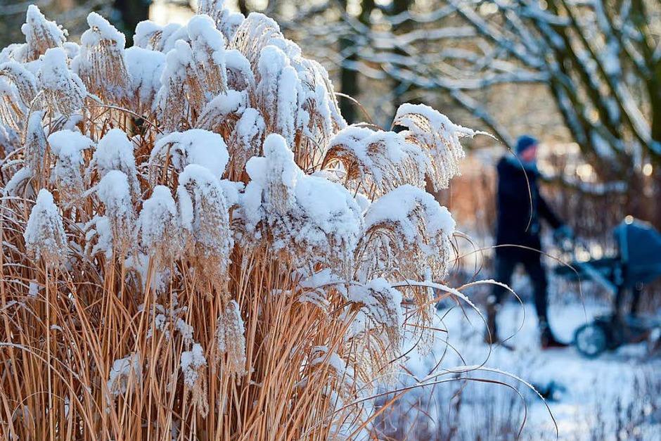 Schnee in Hamburg (Foto: dpa)