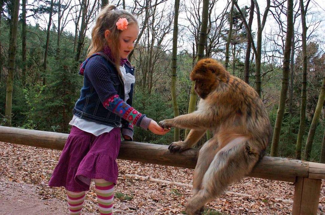 Freundschaft schließen am Affenberg in Kintzheim.  | Foto: Rebekka Sommer